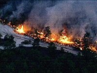 Warton State Park Forest Fire. Picture from NBC10.com